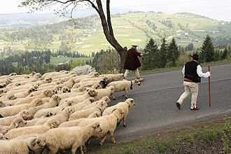 Beskids - Shepherds in Silesian Beskids