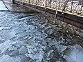 Kra na Odrze k.Mostów Młyńskich.JPG