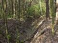 Krasnyy Khutir forest8.jpg