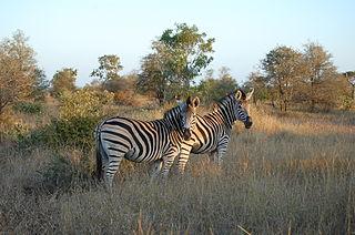 Kruger National Park First national park in South Africa