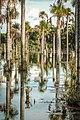 Lagos inundados no Pantanal.jpg