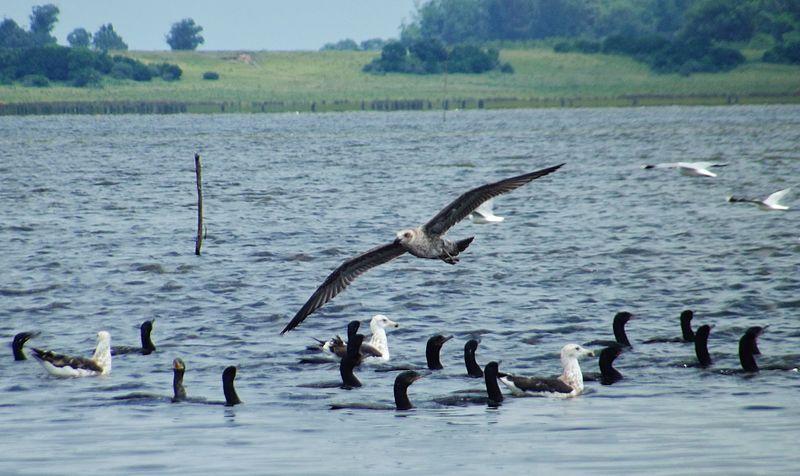 File:Laguna de rocha aves.jpg