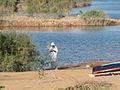 Lake Nasser (2428449238).jpg