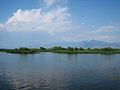 Lake Skadar in Shirokë 2.jpg