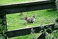 Lammermuir Bunny - geograph.org.uk - 489129.jpg