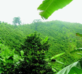 Landscape CA Gunung Butak.png
