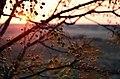 Last Autumn (183663581).jpeg