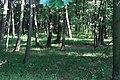 Lasy Łączańskie - panoramio (36).jpg