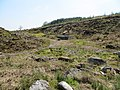 Laughter Quarry - Bellever - May 2012 - panoramio.jpg