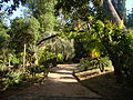 Le parc exotique du Plantier de Costebelle.jpg