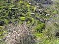 Lifta spring - panoramio (2).jpg