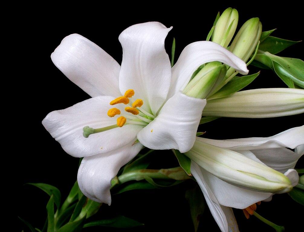 White Plant Vase