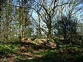 Linear eathwork in Crates Wood, nr Castle Rings 03.JPG