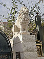 Lion and cat belong to the same Family-2 (10081562496).jpg