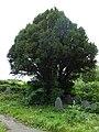 Llangynfelyn, St Cynfelyn's Church, Ceredigion, Wales 10.jpg