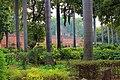 Lodhi Garden - New Delhi - Delhi - IMG 2136.jpg
