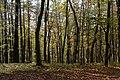 Loipersdorf Herbstwald 20181026 02.jpg