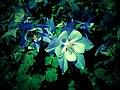 Lomo Flower - Flickr - pinemikey.jpg