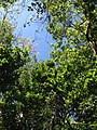 Look up and see green - panoramio.jpg
