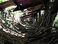 Lots of hardwood logs found inside ruins - panoramio (1).jpg