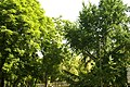 MADRID A.V.U. PLAZA DE LA LEALTAD-JARDINES - panoramio (8).jpg