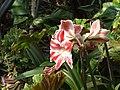 Madeira - Monte - Jardim Tropico (2092629305).jpg