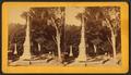 Magnolia, Charleston, S.C, by Ryan, D. J., 1837-.png