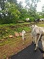 Majhgawan, Madhya Pradesh 485661, India - panoramio (4).jpg