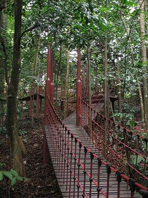 Bukit Nanas - A trail in the KL Forest Eco Park
