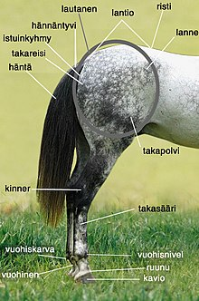 Hevosen Kinner Ongelmat