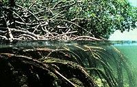 Mangroves.jpg