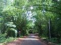 Maredubilli roads.jpg