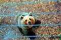 Medved in njegov pogled.jpg