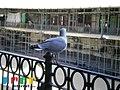 Mercado do Bolhao (5390434574).jpg
