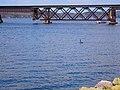 Merrimac Railroad Bridge and a Goose - panoramio.jpg
