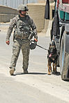 Military working dogs 110727-F-BQ124-006.jpg