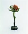 Modello di fiore della ditta Brendel.tif