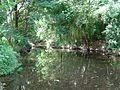 Moggill Creek Brookfield.JPG