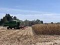 Moissonnage du maïs en septembre 2020, rue des Andrés, Saint-Maurice-de-Beynost, Ain, France (4).jpg