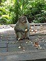 Monkey in Ubud Monkey Forest.jpg