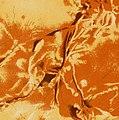 Monseigneur de Saint-Vallier et l'Hôpital général de Québec - Histoire du Monastere de Notre-Dame des Anges (Religieuses hospitalières de la Miséricorde de Jésus) Ordre de Saint-Augustin (1882) (14597592418) (cropped).jpg