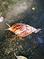 Morning of the snail.jpg