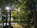 Mosen ved Sønderskovvejen - panoramio.jpg