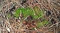 Moss on tree trunk.jpg