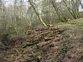 Mossy woodland above the River East Allen near The Holms (2) - geograph.org.uk - 1800768.jpg