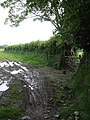 Muddy field entrance near Exton Hill - geograph.org.uk - 455424.jpg