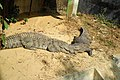 Mugger crocodile in Chittagong Zoo (01).JPG