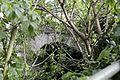 Mumpf Steinbrücke P6A0279.jpg