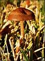 Mushroom - Flickr - pinemikey (3).jpg