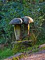 Mushrooms (2941837553).jpg